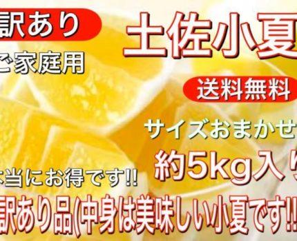 激安大特価!! 訳あり 土佐 小夏 日向夏 高知産 ニューサマーオレンジ (サイズおまかせ)約5kg入り 送料無料